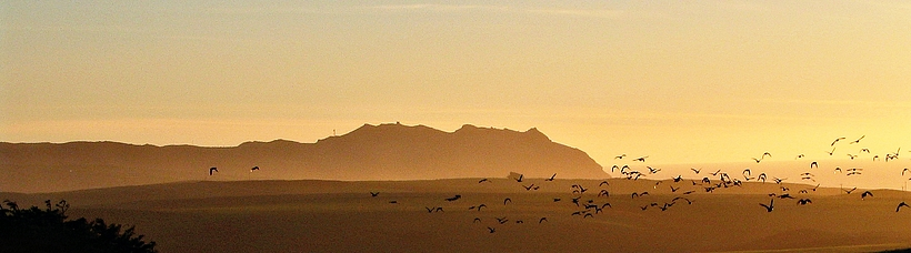 Photo of headlands with birds flying